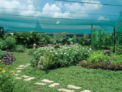 a_butterfly-garden-2