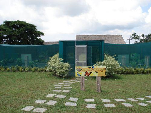 a_butterfly-garden